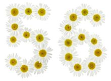 Arabic numeral 56, fifty six, from white flowers of chamomile, i Royalty Free Stock Image