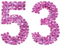 Arabic numeral 53, fifty three, from flowers of lilac, isolated. On white background royalty free stock photos