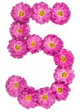 Arabic numeral 5, five, from flowers of chrysanthemum, isolated Stock Photo