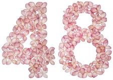 Arabic numeral 48, forty eight, from flowers of hydrangea, isolated on white background.  royalty free stock image