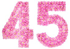 Arabic numeral 45, forty five, pink forget-me-not flowers, isola. Arabic numeral 45, forty five, from pink forget-me-not flowers, isolated on white background Stock Images