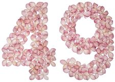 Arabic numeral 49, forty nine, from flowers of hydrangea, isolated on white background.  royalty free stock photos