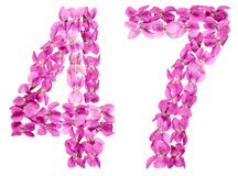 Arabic numeral 47, forty seven, from flowers of viola, isolated. On white background Stock Photos