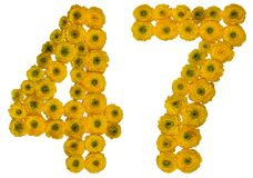 Arabic numeral 47, forty seven, from yellow flowers of buttercup. Isolated on white background Royalty Free Stock Photos