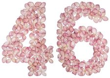 Arabic numeral 46, forty six, from flowers of hydrangea, isolated on white background.  stock photo