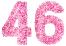 Arabic numeral 46, forty six, from pink forget-me-not flowers, i. Solated on white background Royalty Free Stock Photos
