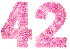 Arabic numeral 42, forty two, from pink forget-me-not flowers, i. Solated on white background Stock Images