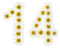 Arabic numeral 14, fourteen, from white flowers of chamomile, is. Olated on white background Stock Images