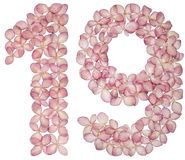 Arabic numeral 19, nineteen, from flowers of hydrangea, isolated on white background.  royalty free stock photo
