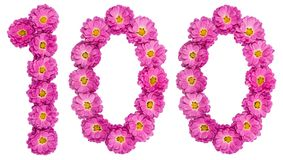 Arabic numeral 100, one hundred, from flowers of chrysanthemum,. Isolated on white background Stock Image