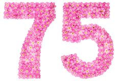 Arabic numeral 75, seventy five, from pink forget-me-not flowers. Isolated on white background royalty free stock photo
