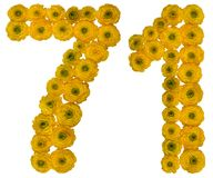 Arabic numeral 71, seventy one, from yellow flowers of buttercup. Isolated on white background Stock Photo
