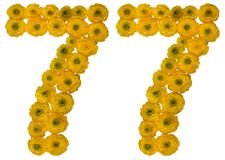 Arabic numeral 77, seventy seven, from yellow flowers of butterc. Up, isolated on white background Stock Images