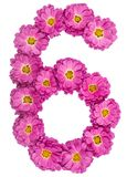 Arabic numeral 6, six, from flowers of chrysanthemum, isolated o Stock Image
