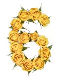 Arabic numeral 6, six, from yellow flowers of rose, isolated on. White background stock photos