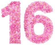 Arabic numeral 16, sixteen, from pink forget-me-not flowers, iso. Lated on white background Royalty Free Stock Image