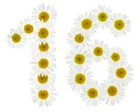 Arabic numeral 16, sixteen, from white flowers of chamomile, iso Royalty Free Stock Photo