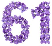Arabic numeral 61, sixty one, from flowers of viola, isolated on. White background Royalty Free Stock Photo