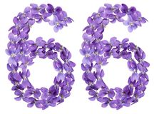 Arabic numeral 66, sixty six, from flowers of viola, isolated on. White background Stock Photo