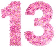 Arabic numeral 13, thirteen, from pink forget-me-not flowers, is. Olated on white background Stock Image