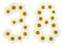 Arabic numeral 38, thirty eight, from white flowers of chamomile Stock Images