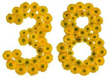 Arabic numeral 38, thirty eight, from yellow flowers of buttercu Royalty Free Stock Images