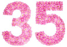 Arabic numeral 35, thirty five, from pink forget-me-not flowers,. Isolated on white background Stock Photography