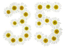 Arabic numeral 35, thirty five, from white flowers of chamomile, Stock Images
