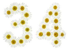 Arabic numeral 34, thirty four, from white flowers of chamomile, Royalty Free Stock Photo