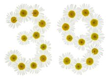 Arabic numeral 39, thirty nine, from white flowers of chamomile, Stock Photography