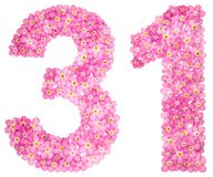 Arabic numeral 31, thirty one, from pink forget-me-not flowers,. Isolated on white background Royalty Free Stock Images
