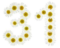 Arabic numeral 31, thirty one, from white flowers of chamomile, Royalty Free Stock Photo