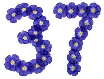 Arabic numeral 37, thirty seven, from blue flowers of flax, isol Stock Photography