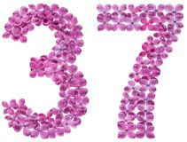 Arabic numeral 37, thirty seven, from flowers of lilac, isolated. On white background royalty free stock images