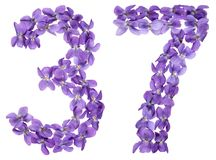 Arabic numeral 37, thirty seven, from flowers of viola, isolated. On white background Stock Images