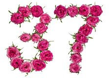 Arabic numeral 37, thirty seven, from red flowers of rose, isola Royalty Free Stock Images