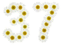Arabic numeral 37, thirty seven, from white flowers of chamomile Stock Photo