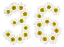 Arabic numeral 36, thirty six, from white flowers of chamomile, Royalty Free Stock Images