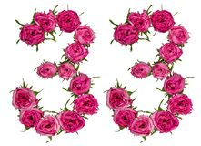 Arabic numeral 33, thirty three, from red flowers of rose, isolated on white background royalty free stock photo