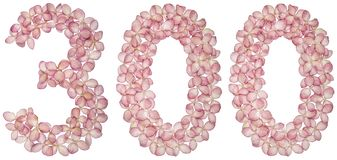 Arabic numeral 300, three hundred, from flowers of hydrangea, isolated on white background. Arabic numeral from 300, three hundred, flowers of hydrangea vector illustration