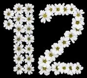 Arabic numeral 12, twelve, one, two, from white flowers of Ceras. Tium tomentosum, isolated on black background Royalty Free Illustration