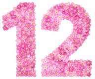 Arabic numeral 12, twelve, from pink forget-me-not flowers, isol. Ated on white background Royalty Free Illustration
