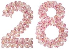 Arabic numeral 28, twenty eight, from flowers of hydrangea, isolated on white background stock photo