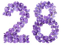 Arabic numeral 28, twenty eight, from flowers of viola, isolated. On white background Stock Images