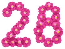 Arabic numeral 28, twenty eight, from pink flowers of flax, isolated on white background stock images