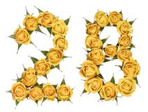 Arabic numeral 28, twenty eight, from yellow flowers of rose, is. Olated on white background royalty free stock photo