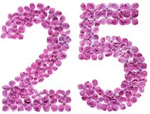Arabic numeral 25, twenty five, from flowers of lilac, isolated. On white background stock photography