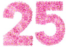 Arabic numeral 25, twenty five, from pink forget-me-not flowers,. Isolated on white background Royalty Free Stock Image