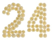 Arabic numeral 24, twenty four, from cream flowers of chrysanthemum, isolated on white background stock image