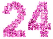 Arabic numeral 24, twenty four, from flowers of viola, isolated. On white background royalty free stock photos